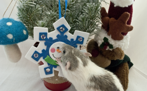 Scoby whispers his secrets to the Ratsmas Snowflake.