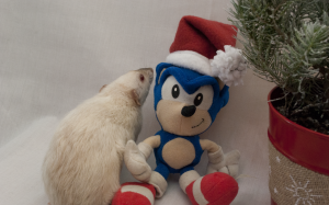 """All I want for Christmas is your flesh,"" Ginger tells Sonic."